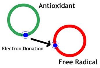 Antioxidant-Works.jpg